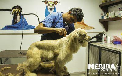 Mundo Safari Pet Shop 6