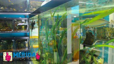 Animalosos Pet shop 3